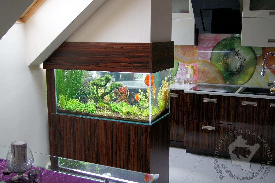 Ayuda acuario doble vista portalpez acuarios mascotas - Peceras en casa ...